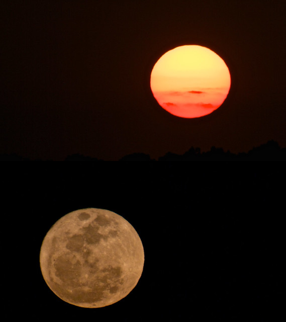 78/365: Moonrise, Sunset