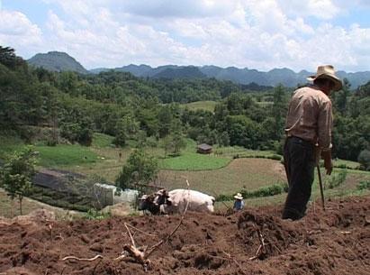 Fieldwork in Mexico II