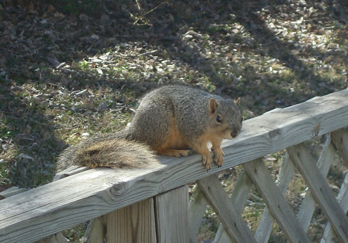 My Squirrely Visitor