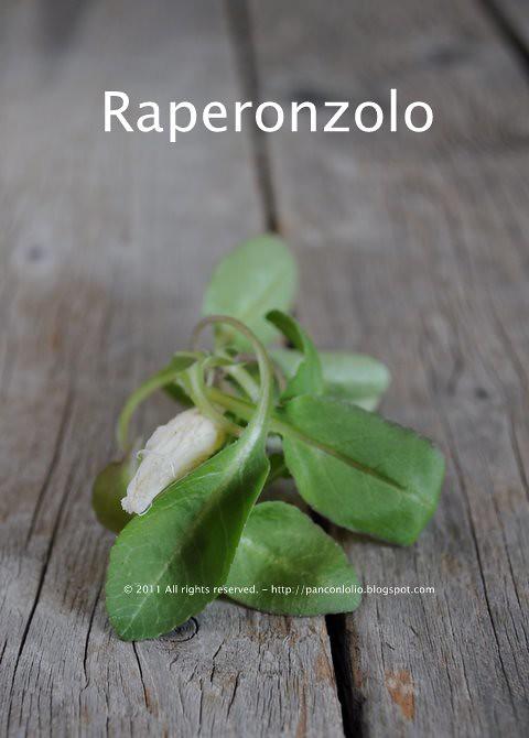 erbette selvatiche: raperonzolo