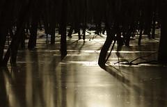 Rflexion (Joanne Gigure) Tags: winter hiver rosemere tylee marecage vanagram