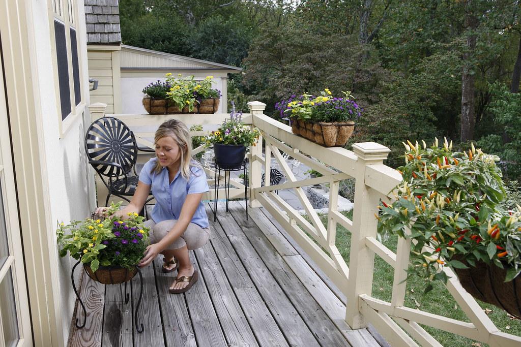 Decorating Deck   Various (Avant Garden Decor) Tags: Flowers Plants  Backyard Outdoor Balcony