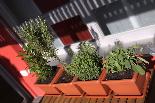 Primavera - the herbs