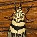 [Royal Belum] - Aku hanya serangga