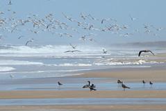 desert beach (Alberto Schwonke) Tags: beach birds trekking uruguay cabopolonio