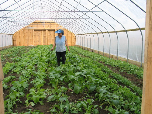 A Flats Mentor Farm grower tends Asian crops growing in a high tunnel put in place with NRCS assistance.