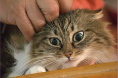 DSC_0314 (Francesco_Fontana) Tags: cat kat chat gato katze mace  macska gatto  con kot gat koka kedi katt kissa kttur maka kucing pusa mo   kat     pisic  qattus   kass kais