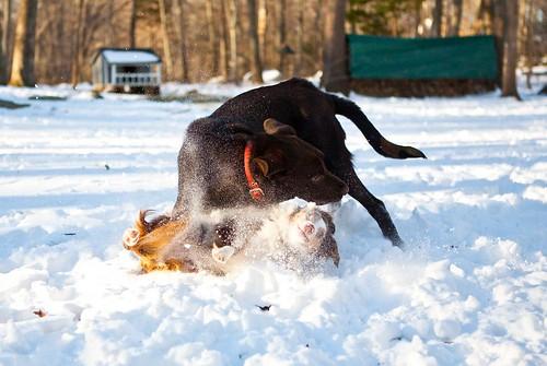 Snow-Wipeout