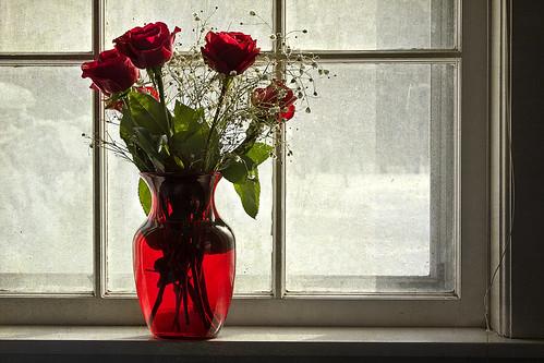 フリー写真素材, 花・植物, バラ科, 薔薇・バラ, 窓辺, 赤色の花, 花瓶,