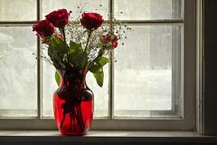 [フリー画像] 花・植物, バラ科, 薔薇・バラ, 窓辺, 赤色の花, 花瓶, 201102020700