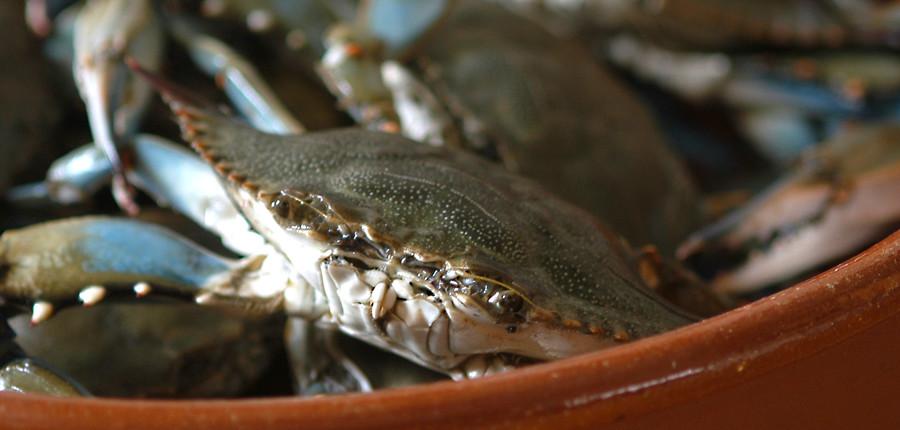 gumbo crab1