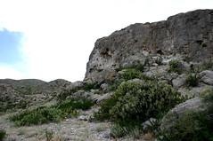 Cuatro cinegas, estribaciones de la Sierra de San Marcos 2-07-07 IMG_2466-Ed (fernandodelatorre46) Tags: cactus mxico cacti mexico desert desierto cuatrocienegas desiertomexicano cuatrocinegascoahuila cactusdemexico