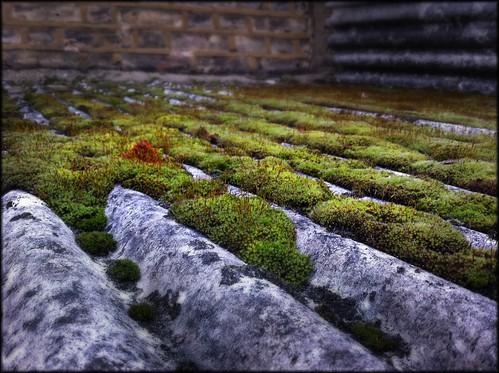 moss of rooftop