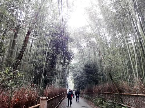 kyoto arashiyama 5_4
