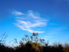 ...ginestre ... (rebranca46) Tags: friends italy nuvola blu cielo 1001nights marche ginestre arbusti rebranca allegrisinasceosidiventa 1001nightsmagiccity febbraio2011