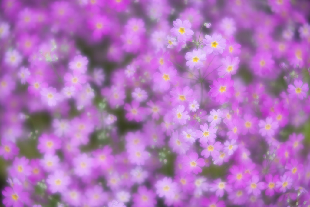 Flowers in soft