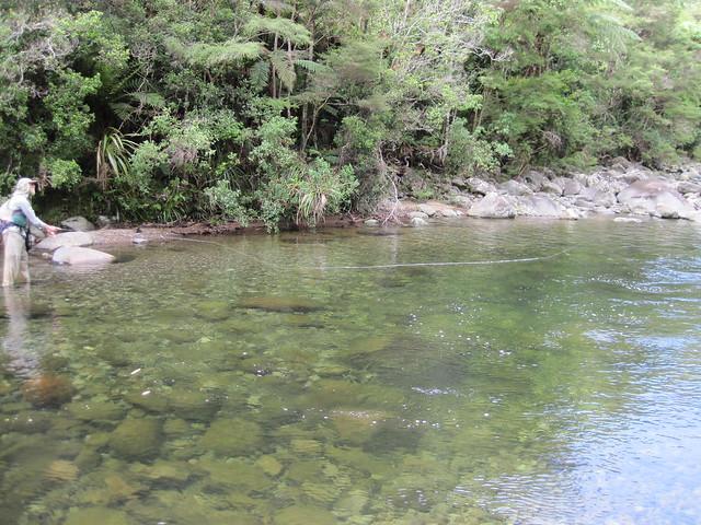 coromandel stream fishing