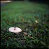 (19/77) Tags: slr 120 film mushroom grass mediumformat malaysia 1977 negativescan kiev88 kodakektacolorpro160 autaut canoscan8800f arsat80mmf28 myasin