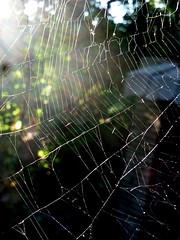 Spider Web (navema) Tags: toronto ontario canada animal spider web arachnid spiderweb silk cobweb spidersilk navema