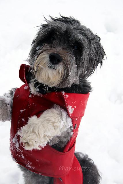 foto cane buffoa 2 zampe  nella neve