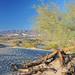 #281 Mesquite Sand Dunes (USA_20081009_DSC_2834)