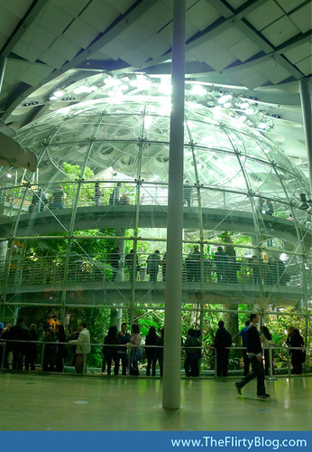 san-francisco-academy-of-sciences-rainforests
