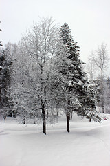 View From The Front Porch (lmundy2002) Tags: trees winter snow frontporch