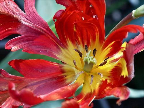 Blossom of fire