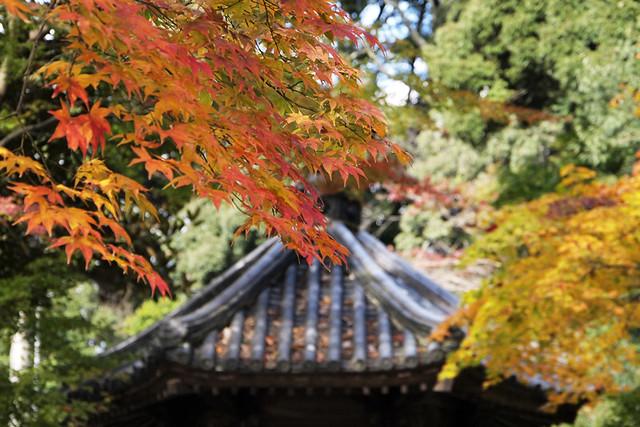 20101118_135950_當麻寺