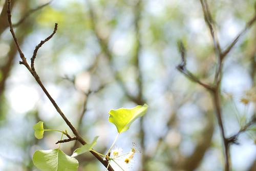 V in tree 006