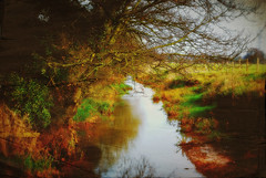The Stream (Roamer 57 (Not Around Much)) Tags: trees water nikon stream sunday common biggleswade teexture tatot magicunicornverybest selectbestexcellence sbfmasterpiece