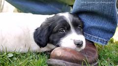 But I still see you ;-) (Rockabella Anne) Tags: park sun nature sunshine puppy essen puppies play natur sonne nordrheinwestfalen spielen sonnenschein welpe werden whelp northrhinewestphalia hundewelpen essenwerden whelps