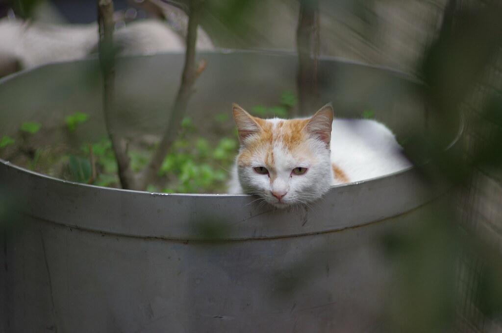 懶洋洋的貓..FA77二公主入手試拍
