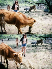 makin friends (LindseyL33) Tags: girls fur texas dress cows jean farm country bra farming tan stomach moo jacket bikini blonde shorts longhorn hay brunette abs sequin