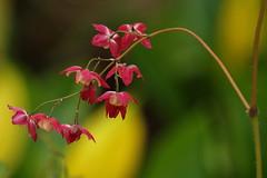 Springtime (nikjanssen) Tags: flowers macro nature spring lente arboretumbokrijk vanagram