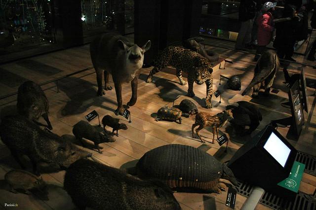 Ici, quelques espèces d'animaux très réalistes