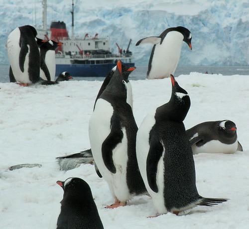 ANTARCTICA2010-264 Petermann Island 南极 彼得曼岛