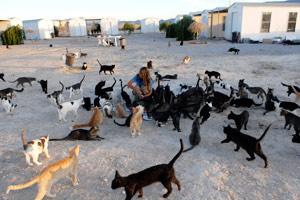 FLOCK - hoarding situation in Pahrump, Nevada