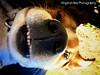 Harley Rey (Willow Creek Photography) Tags: dog mutt canine harley funnydog mansbestfriend mongrel goofydog brownandwhitedog pitbullmix houndmix harleyrey