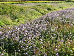 (judie35) Tags: field taiwan  sanyi