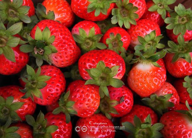 大湖草莓之旅 - 大力推薦 大山農園 R1039334