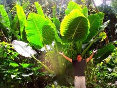 ~~Hawaii-The Big Island #2~~ (TravelsThruTheUniverse) Tags: hawaii thebigisland junglegardens tropicalgardens tropicaljungle tropicallandscapes junglefoliageplants tropicalplantsgardeninglandscaping exoticplantsgardenslandscapes tropicalplantsgardenslandscapes