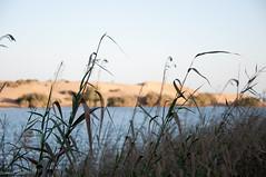 ¿Maspalomas sin dunas? (- GD photography -) Tags: lake beach nikon playa arena lugares dunas camaras maspalomas charca 2011 d90 municipios sanbartolomedetirajana