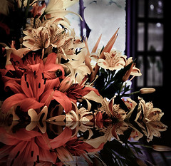 mirrors of the soul (Martha MGR) Tags: flower texture nature square natureza vernissage mmgr marthamgr 4msphotographicdream 3msroyalflowers 2msroyalstation marthamariagrabnerraymundo marthamgraymundo