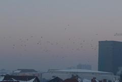Crowmutting (Rusty Marvin - Imagery by John) Tags: snow bird birds flying commuting crow crows minus sibiu triptosibiu