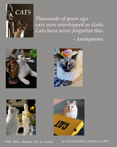 Let Us Now Praise Cats