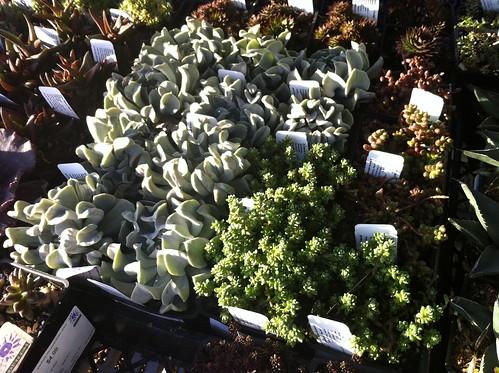 a trip to the garden center