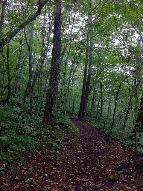 軽井沢の雑木林のフリー写真素材