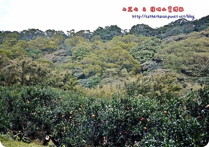 86 平菁街42巷櫻花樹