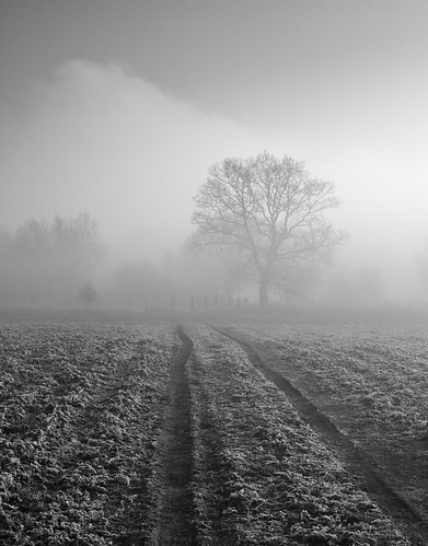 path to the misty river